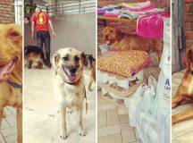 JUB Nyári Jótékonysági Gála a Kutyusokért 2018